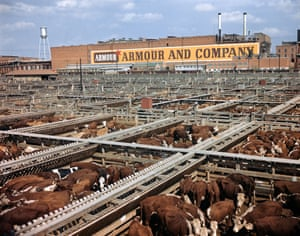 A cattle stockyard in Texas in the 1960s