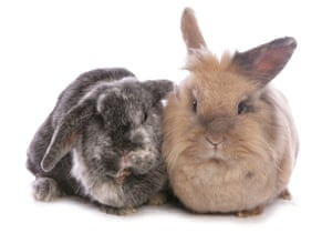Portrait of two adult female rabbits.