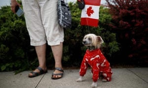 Dog in Canadian clothing