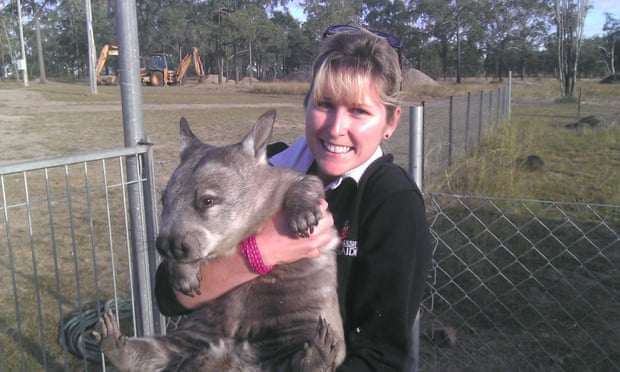 Alyce Swinbourne and southern hairy-nosed wombat Lanie, who is part of the wombat project between Safe Haven at Mount Larcom and the University of Queensland. Photograph: Safe Haven/The University of Queensland