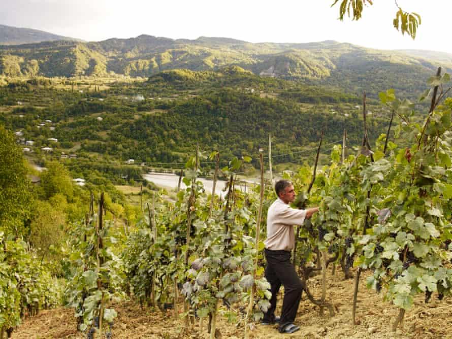 Murad Vatsadze's son tending the family's vines, in Racha, Georgia