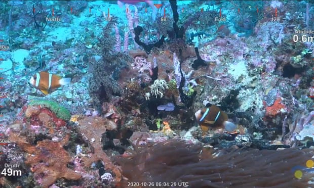 Floating Coral Reef Higher Than The Empire State Building Discovered Off Cape York