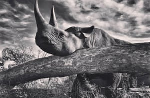 Prince Harry's black-and-white rhino photo.