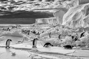 Emperor penguins, Terra Nova Bay, Ross Sea, Antarctica