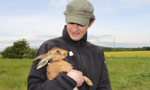 Why the long pause? We need to plant more elephant grass to shelter brown hares.