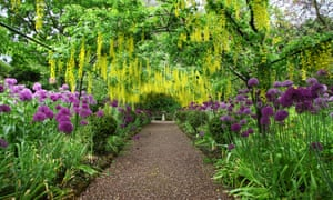 The Laburnum arch at the Dorothy Clive Garden