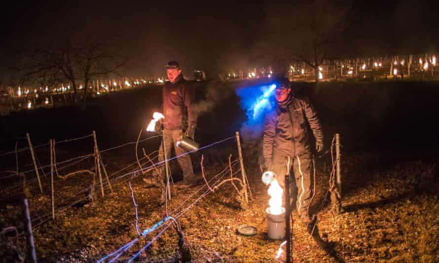 شراب سازان فرانسوی در یک تاکستان در Chablis ، بورگوندی ، فرانسه شمع های ضد یخ روشن می کنند.