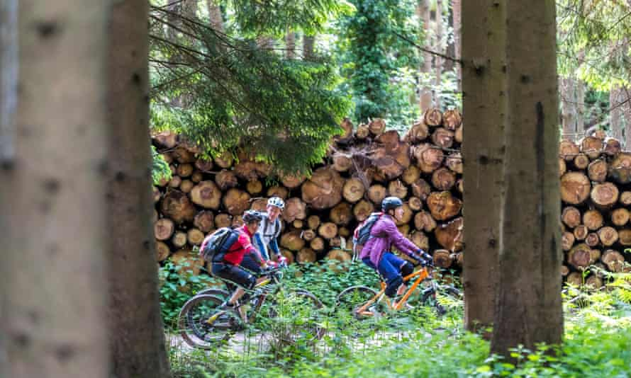 Mountain biking in the Forest of Dean