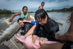 Federico Mosquera, endangered species coordinator from Omacha Foundation, a Colombian non-profit working in wildlife conservation issues, with a captured Amazon river dolphin