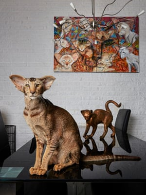 Oriental shorthair cat Flap photographed by Isabella Rozendaal in Amsterdam.