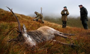 A red deer stag shot on the Glenfalloch estate in Inverarnan, Stirling.