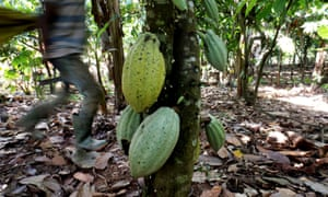 Ivory Coast produces about 45% of the world's cocoa.