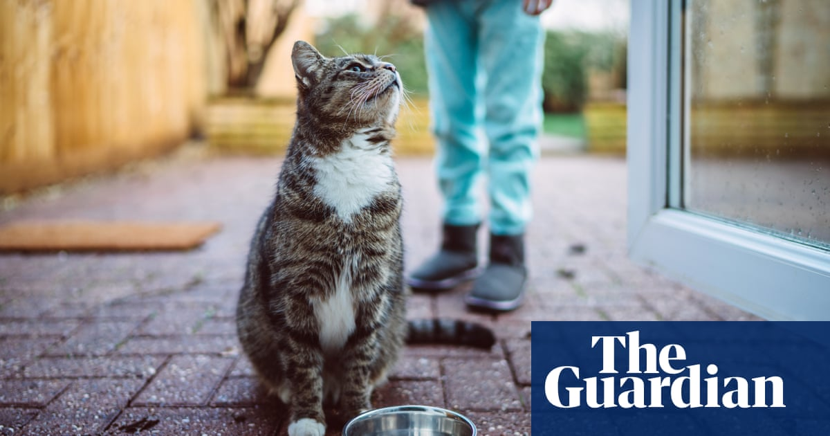 Retailers accused of selling possibly deadly cat food after recall