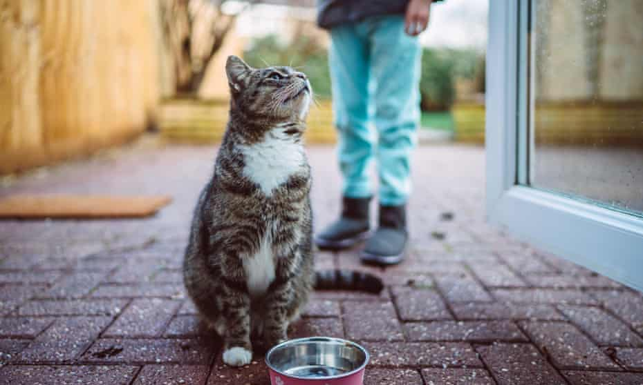 A cat waiting for food