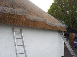 Thatched roof in South Milton