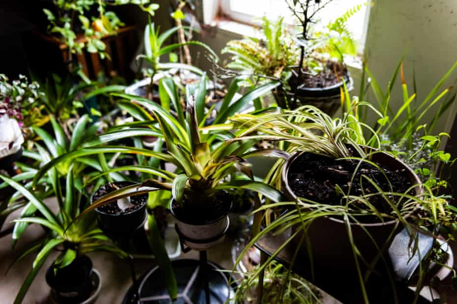 'Normal people who were previously uninvolved suddenly had huge prop stations with grow lights and layers,' said Sarina Daniels.