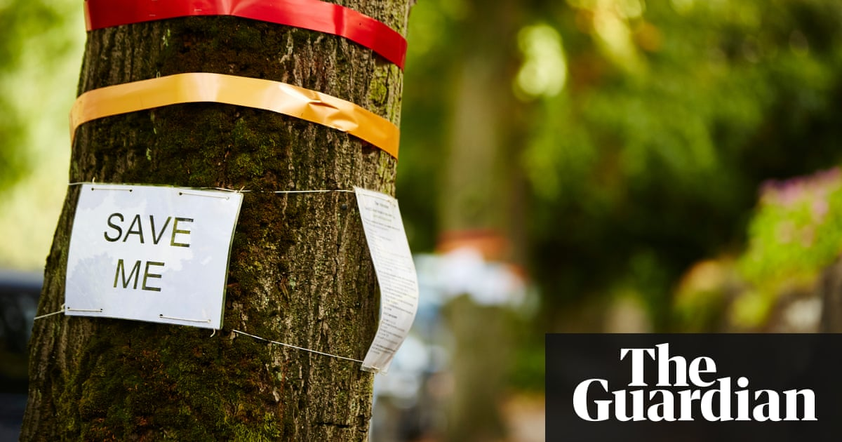 The Importance Of Urban Forests Why Money Really Does