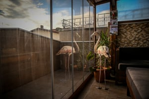 A flamingo is reflected in a window of a house having being rescued after it was injured at Yeniköy beach.