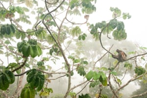 Winner, young photographers up to 14 years: In the canopy
