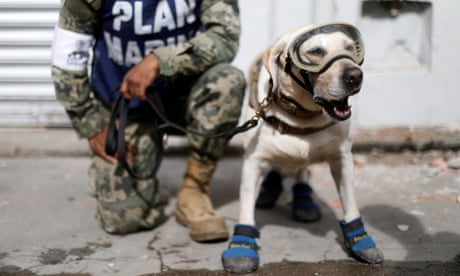 Frida: the Mexican rescue dog who has saved more than 52 lives