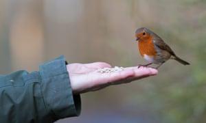 Robins nest box workshop, Carmarthenshire