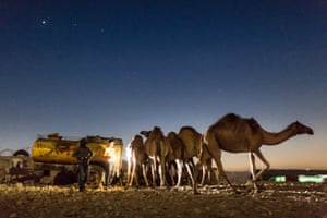 As night falls, herds of camels return to the village to bed down