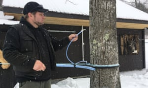A reverse osmosis machine extracts syrup from a maple tree.