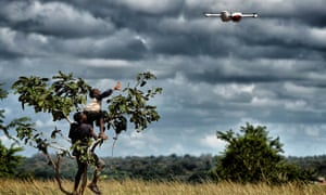 Two Malawian boys climb a tree to reach a drone flying overhead