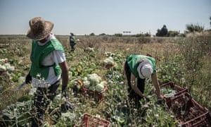 Advocates of gleaning say that the movement could reduce pressure on land use, improve diets, feed the hungry and provide work for the socially excluded.
