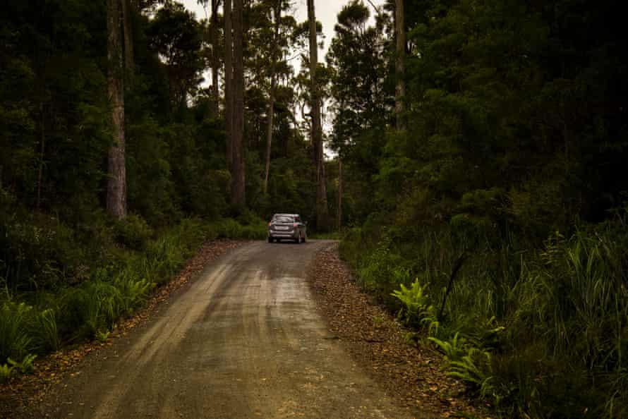 Driving into the Tarkine
