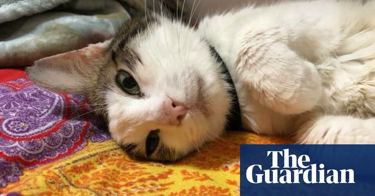 Why populists adore cats – and use them in their political propaganda