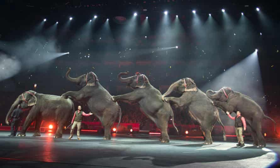 elephants Ringling Bros. and Barnum & Bailey Circus