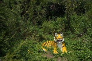 A model of a Siberian tiger is displayed at the Hengdaohezi Siberian Tiger Park in Hengdaohezi township on the outskirts of Mudanjiang