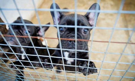 NSW animal welfare inspector accepted $35,000 from puppy retailer it