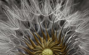 2nd place went to a seed head on a plant, magnified 2x