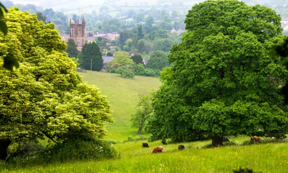 A meadow in Somerset: between the wild and the urban.