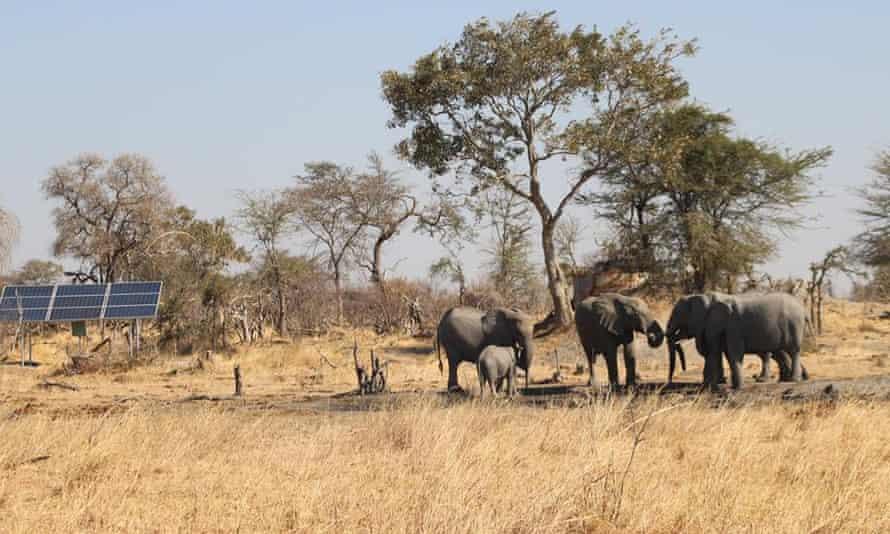 Elephants next to a borehole. Robins camp, Hwange, October 2016.
