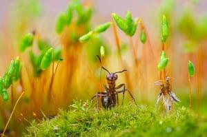 Ant Plant Guard by Serhii Miroshnyk