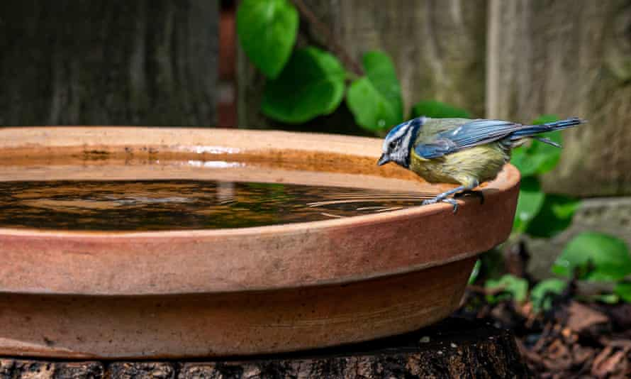 You don't need a fancy bird bath – any shallow dish will do.