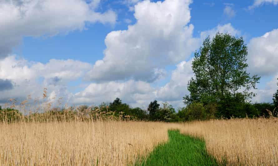 Fowlmere RSPB reserve in Cambridgeshire, one of many habitats currently protected by an EU directive.