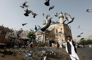 Pigeons outside Shah-e Doh Shamshira mosque in Kabul, Afghanistan