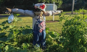 Jasper the scarecrow at Watson's fellowship garden in Orange, Connecticut