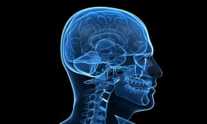 As brains become more complex so sensory consciousness becomes enriched