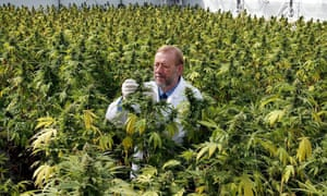 Alcohol and pharma groups have been quietly backing anti-marijuana efforts across the US as calls for legalization ramp up.