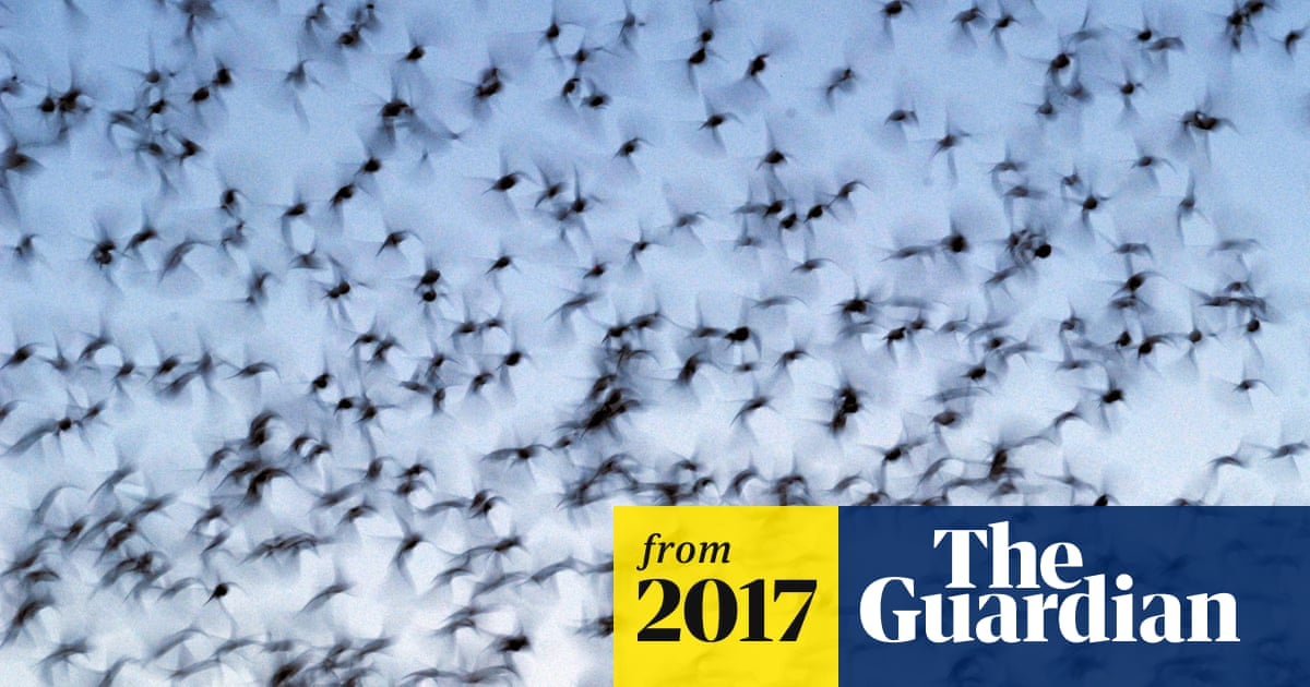 Nearly 400 birds killed after flying into Texas skyscraper