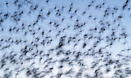 Nearly 400 birds crashed into the American National Building in Galveston, Texas.