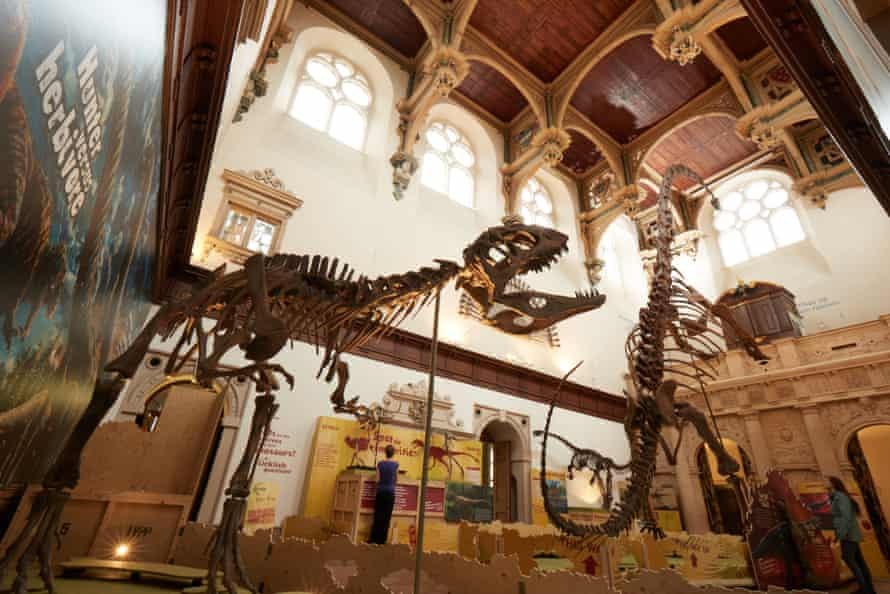 Mamenchisaurus being hunted by Sinraptor in the Great Hall of Wollaton Hall, Nottingham Natural History Museum.