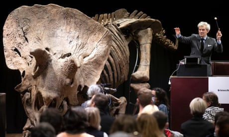 Largest triceratops ever unearthed sold for €6.6m at Paris auction
