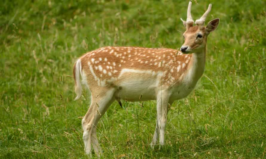 Researchers said the risk was not just linked to exotic wild animals but also deer killed closer to home for venison.