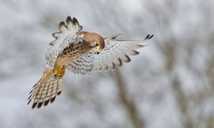 'The kestrel perched on my shoulder – it was the most incredibly romantic and close encounter.'